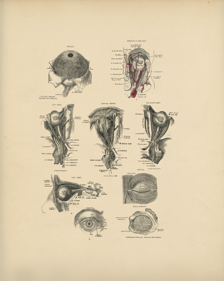 Eye Anatomy Print