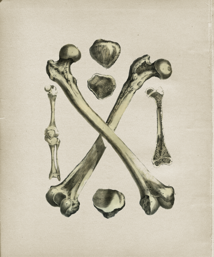 Crossed Bones Femur Print