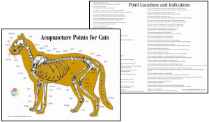 Compare The Directional Terms Of The Cat And Human