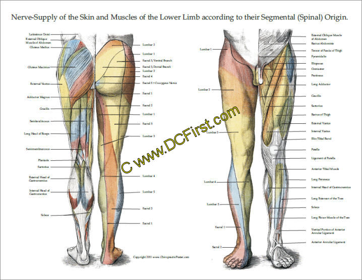 Lower Extremity Poster